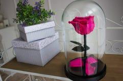 Durable s'est levé dans un flacon, s'est levé dans un dôme en verre, stabilisé, un cadeau, s'est levé en verre, rose préservée, d image libre de droits