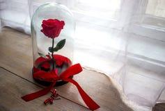 Durable s'est levé dans un flacon, s'est levé dans un dôme en verre, stabilisé, un cadeau, s'est levé en verre, rose préservée, p Photographie stock libre de droits