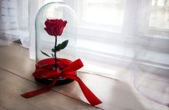 Durable s'est levé dans un flacon, s'est levé dans un dôme en verre, stabilisé, un cadeau, s'est levé en verre, rose préservée, p images libres de droits