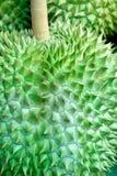 Durain, ο βασιλιάς των φρούτων στην Ταϊλάνδη Durain στην αγορά Στοκ Εικόνες