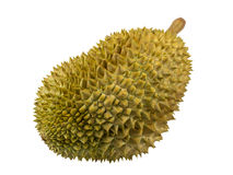 Durain fruit isolated Royalty Free Stock Image