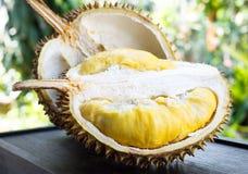 Durain. Thai fruit : Durain fresh from garden Stock Images