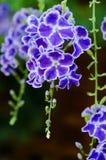 Durantageisha Girl Flowers Stock Foto