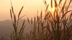 Durante puesta del sol Fotografía de archivo libre de regalías