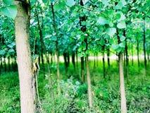 Durata degli alberi fotografia stock