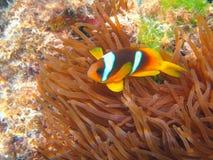 Durata subacquea del mare tropicale Immagini Stock Libere da Diritti