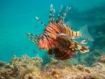 Durata subacquea del mare tropicale Fotografia Stock