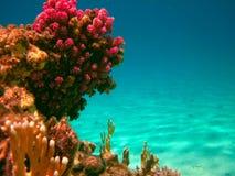 Durata subacquea del mare tropicale Fotografie Stock