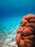 Durata subacquea del mare tropicale Immagine Stock