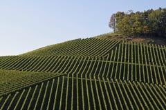 Durbach vineyards. View across Vineyards on a slope near Durbach Ortenau, Baden Germany Stock Photography