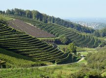Durbach vineyards. View across Vineyards on a slope near Durbach Ortenau, Baden Germany Stock Photo