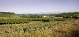durbanville winelands 免版税库存图片