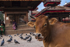 Durbar Square in Kathmandu Royalty Free Stock Photo