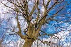 Durch blattlose Baumschattenbilder über Winterhimmel mit Wolken oben schauen, natürlicher Hintergrund Stockbilder