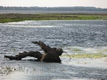 Durch das Flussufer Lizenzfreies Stockfoto