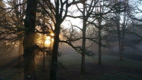 Durch das Morgenlicht Stockfotografie