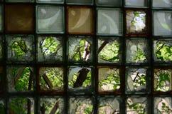 Durch defektes Glas können Sie die Bäume sehen Stockbild