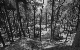 Durch den Baum Stockfoto