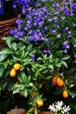 Durch den Blumenhändler Lizenzfreies Stockfoto