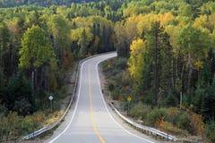 Durch den Herbstwald Stockbild