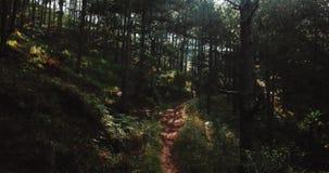 Durch den Horror-Konzeptwald Wald des Morgens niedrig fliegen mystischen hellowen herein Feenhaftes surise im wilden Wald und in  stock video footage