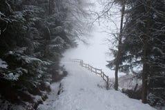 Durch den Nebel Stockbild