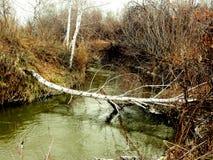 Herbst auf dem Fluss Stockbild