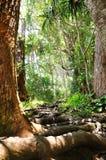 Durch den tropischen Wald Lizenzfreies Stockfoto