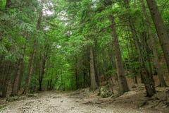 Durch den Wald stockfotos
