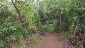 Durch den Wald gehen, Mahe Island, Seychellen 2 stock footage