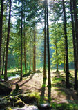 Durch die Bäume Stockfoto