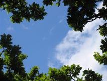 Durch die Bäume gen Himmel Stockfotos