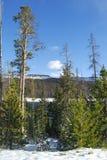 Durch die Bäume im Winter lizenzfreie stockbilder