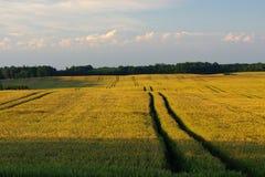 Durch die Felder Stockbild