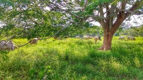 Durch die Niederlassungen können Sie das Leben auf dem Bauernhof sehen Lizenzfreie Stockbilder