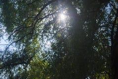 Durch die starken Laubstrahlen der Sonne Lizenzfreies Stockbild