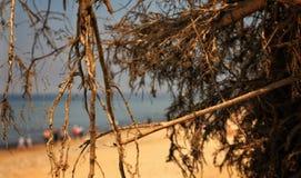 Durch die Wildnis zum Meer stockfoto