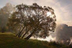 Durch einen Nebel Lizenzfreies Stockbild