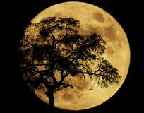 Durch Mondschein Stockfotografie