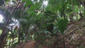 Durch Nationalpark Vallee de Mai, Praslin-Insel, Seychellen 2 gehen stock video footage