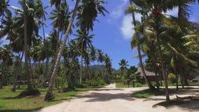 Durch Palmen auf exotischer Insel gehen, La Digue, Seychellen 3 stock video