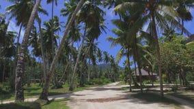 Durch Palmen auf exotischer Insel gehen, La Digue, Seychellen 2 stock video