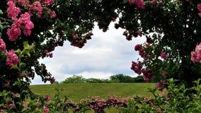 Durch Rose Arbor Stockbild