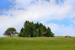 Durch schöne Landschaft nahe dem Berg Schauinsland im Schwarzwald wandern, Deutschland Stockfotos