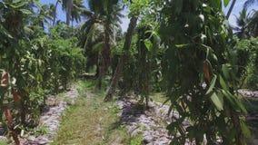 Durch Vanilleanlagen gehen, La Digue-Insel, Seychellen stock video