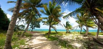 Durchbrennenstrand-Palmen Stockbilder