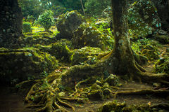 Durchdachte Baum-Wurzeln stockfotos