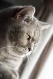 Durchdachte Katze Lizenzfreie Stockfotografie