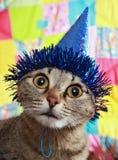 Durchdachte Katze in einer feierlichen Schutzkappe Stockbilder