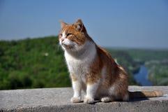 Durchdachte rote Katze Lizenzfreie Stockfotos